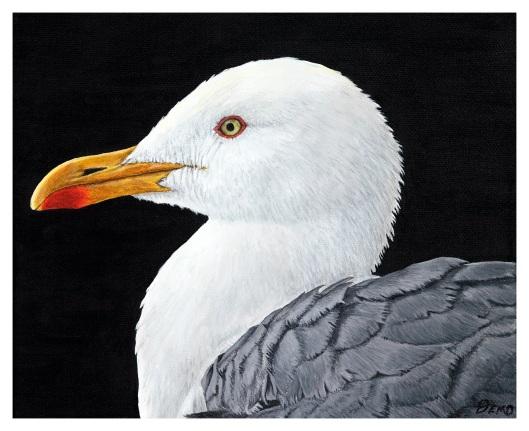 Lesser black-backed gull portrait print - Liz Drewitt