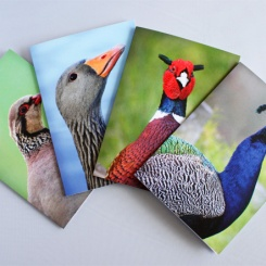 Wildlife photo cards